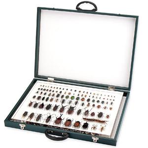 集まれ世界の昆虫達 大標本トランク画像