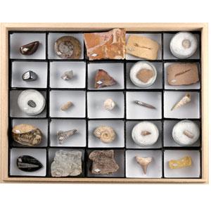 地球の神秘「化石25点コレクション」画像