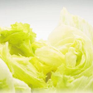 水をかければ生野菜!菜食賢備(5年保存)画像
